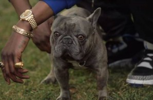 2 Chainz Pets A $100,000 Bulldog (Video)
